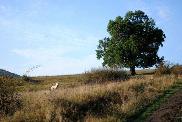Перераспределение земельных участков – основания, причины отказа