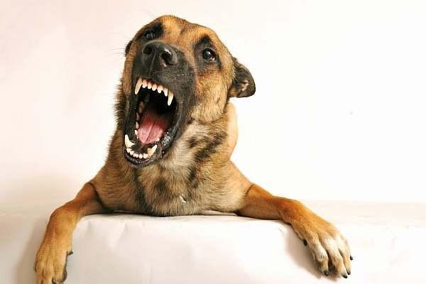 У соседей постоянно лает собака в квартире: что можно сделать и куда обращаться?