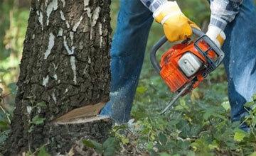 Закон о валежнике и сухостое в 2019 году: можно ли забирать из леса поваленные и высохшие деревья?