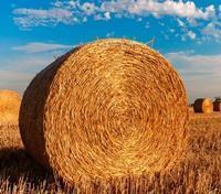 Как происходит аренда земли у администрации сельского поселения?
