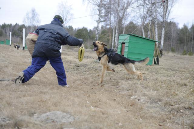 Список запрещенных к содержанию в домашних условиях животных в России в 2019 году