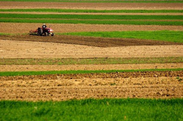Как получить земли сельхозназначения бесплатно и на платной основе?
