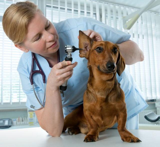 Страхование животных в России: кого можно застраховать, насколько выгодно?