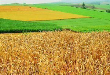 Какой штраф за нецелевое использование земельного участка?