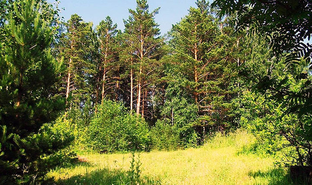 Как взять лесной участок в аренду и правильно оформить все документы?