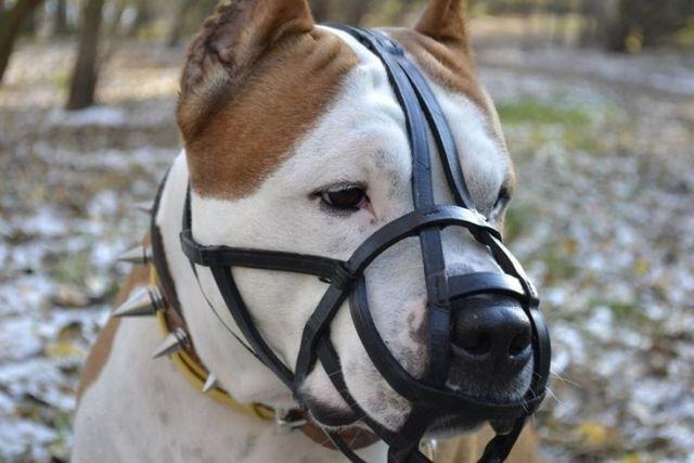 Перечень потенциально опасных пород собак, утвержденный Правительством РФ: требования к владельцам и к содержанию